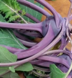 Homegrown Kohlrabi